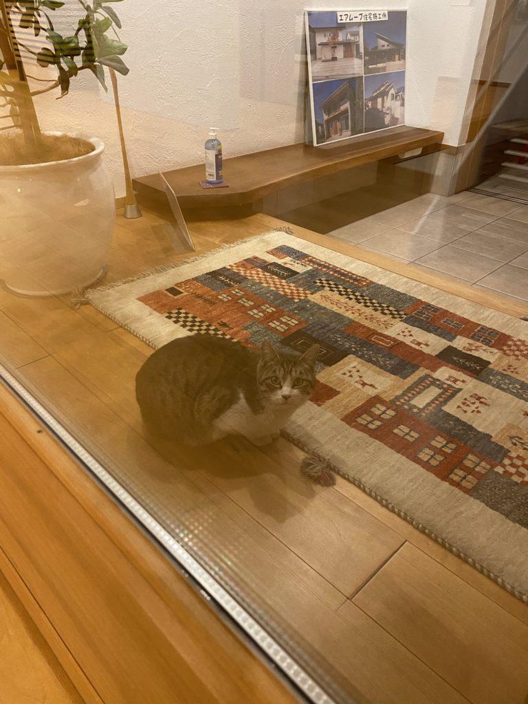 猫は玄関ホールで丸くなる