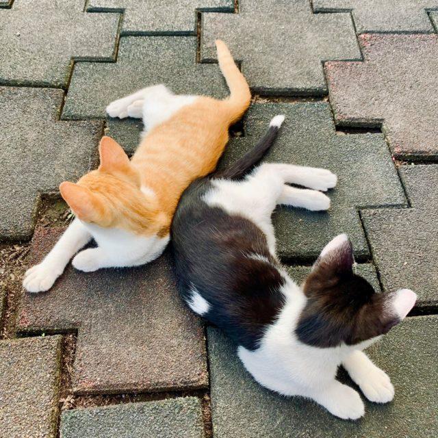 猫ちゃんも食欲の秋…?