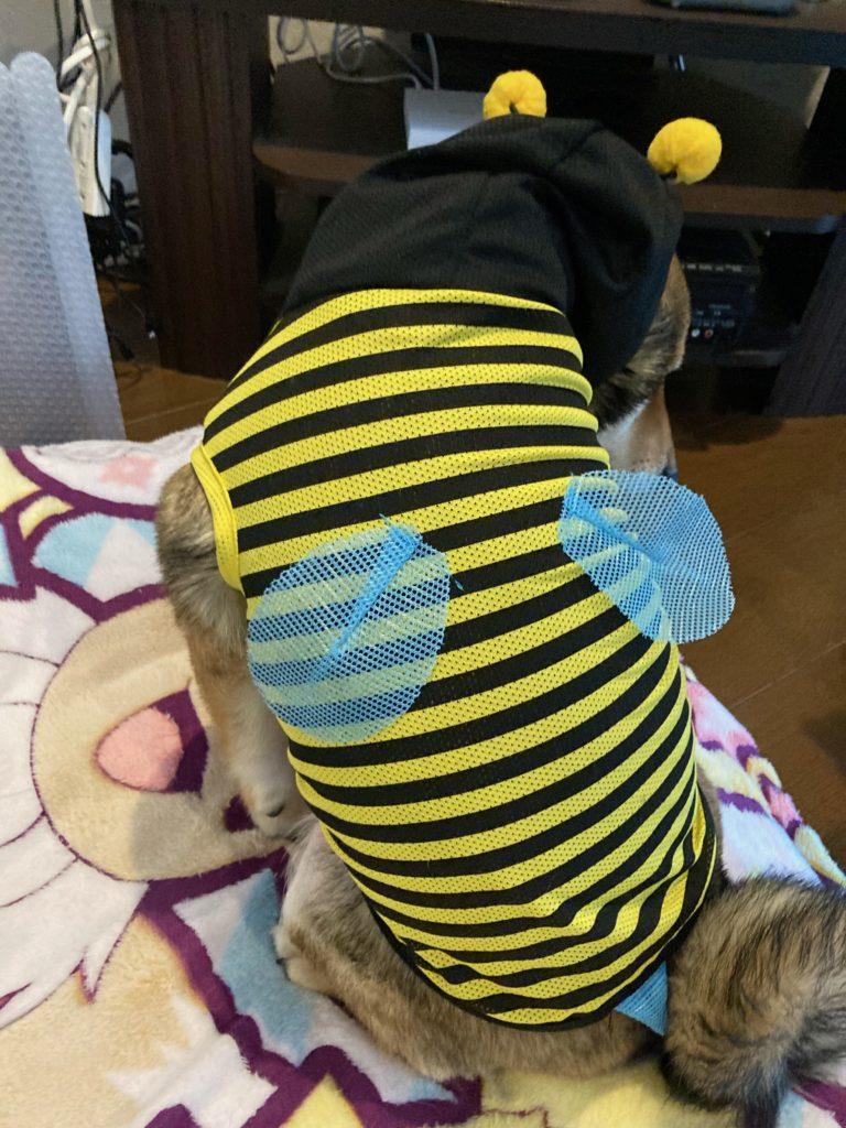 ミツバチみーっけ!